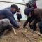 EN LA COMUNA RUMILOMA DE LA PARROQUIA INGAPIRCA SE REALIZÓ LA SIEMBRA DE 300 PLANTAS DE TOMATE DE MESA